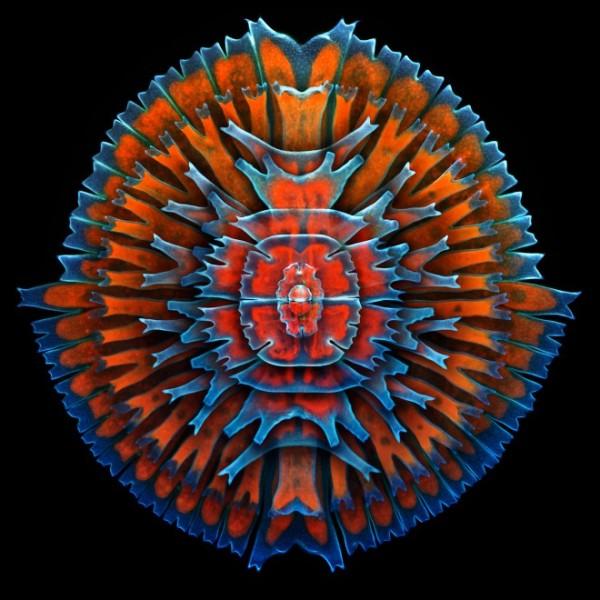 Imagem microscópica de alga unicelular
