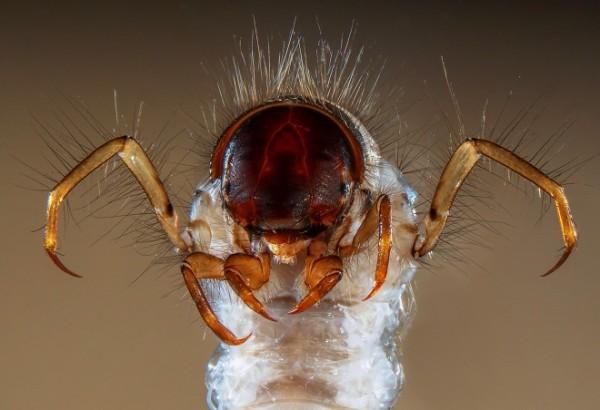 imagens impressionantes feitas por microscópio