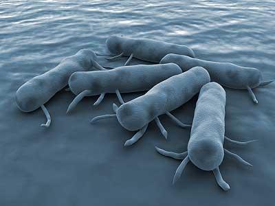 bacteria e doenças associadas