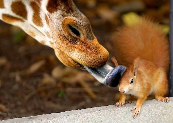beijo animal