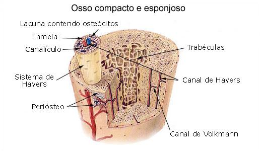 Estrutura de um tecido ósseo