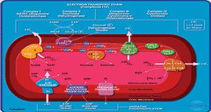 Bioquimica-Celular