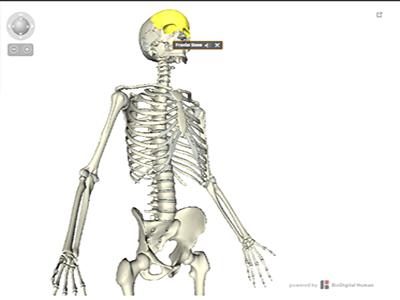 Atlas do Corpo humano - Sistema esquelético
