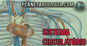 Aula e Simulado sobre sistema Circulatório