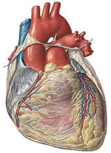 Limites do coração