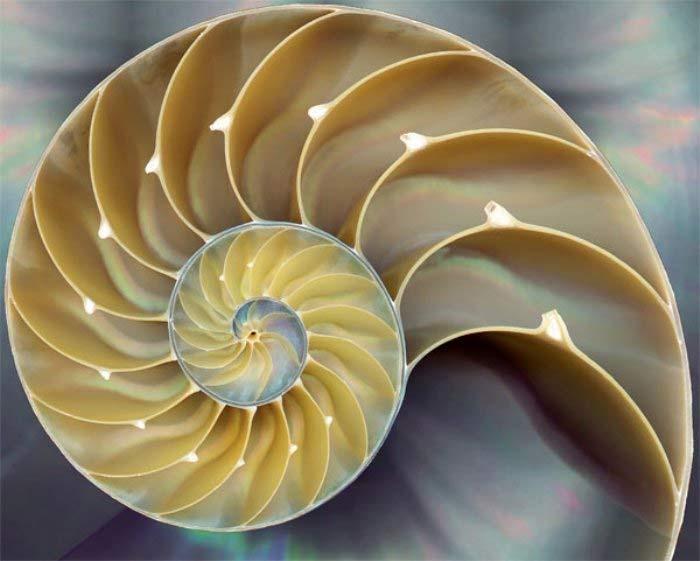 Fibonacce