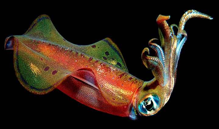 Filo dos Moluscos Características
