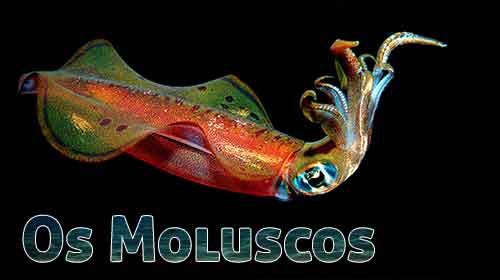 Os Moluscos