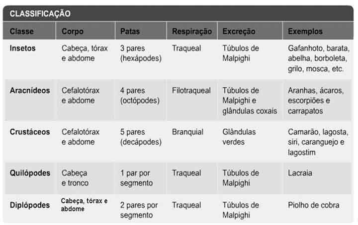 Filo dos Artrópodes – Características
