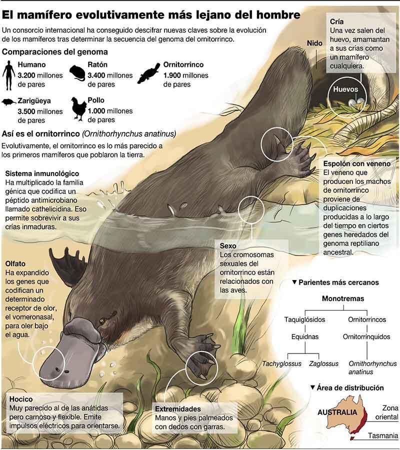 Evolução dos ornitorrincos