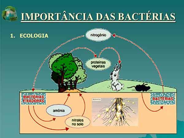 importância ecológica das bactérias