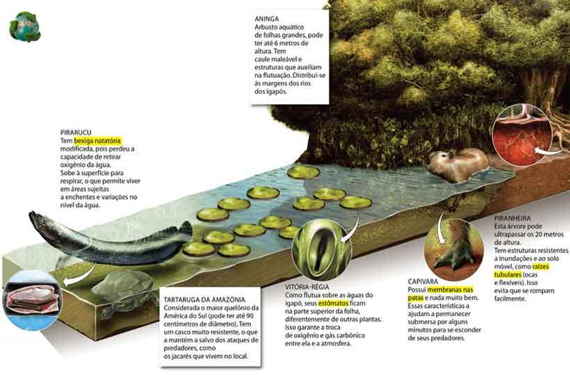 bioma floresta amazônica
