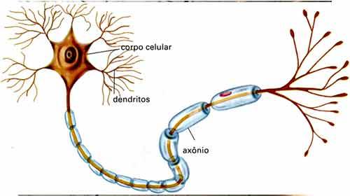 Sistema Nervoso Resumo