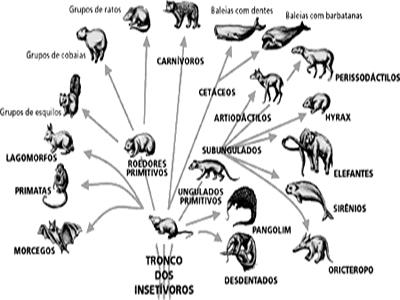 Os Mamíferos - Classificação e Características