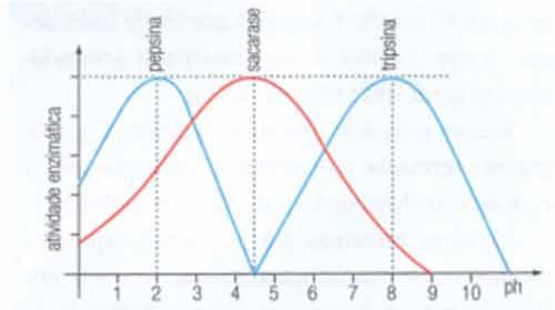 temperatura variação enzima