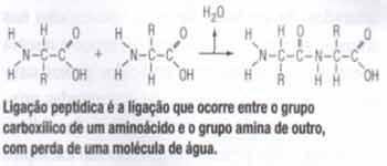 ligação peptidica