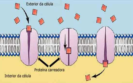 carreador difusão facilitada