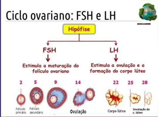 fsh lh