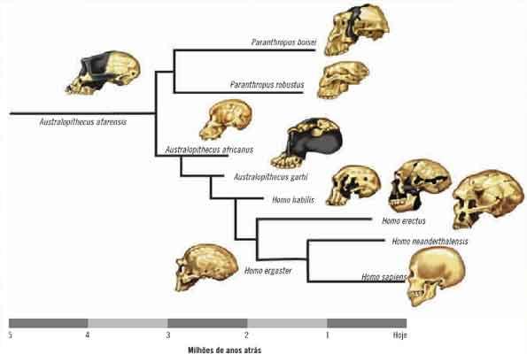 Primatas - características e evolução