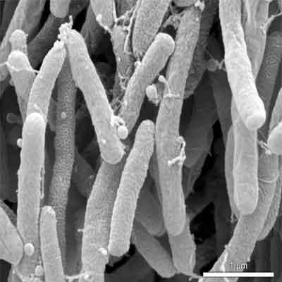 bactéria genoma codificado