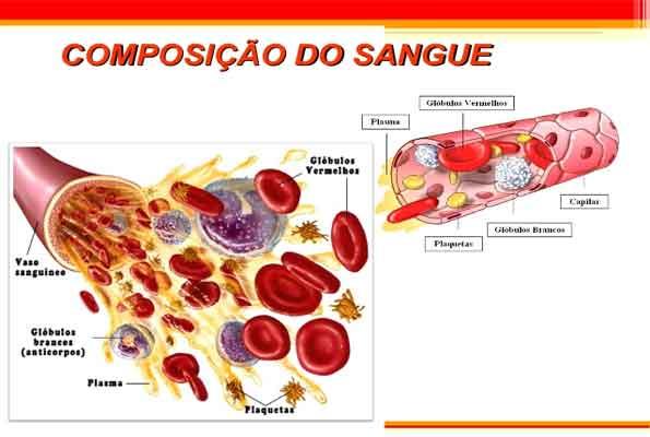 O Sangue – composição, funções e células