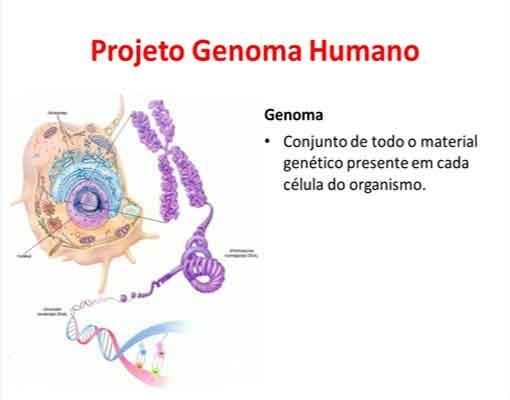 O projeto genoma humano dna resumo