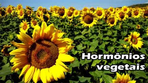 crescimento vegetal