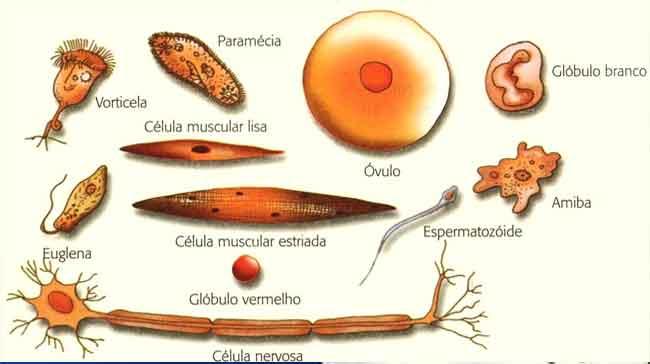 Organização celular dos seres vivos