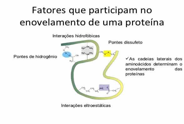 Síntese proteica resumo