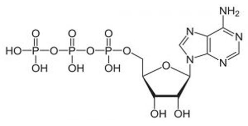 O que é ATP - Adenosina trifosfato
