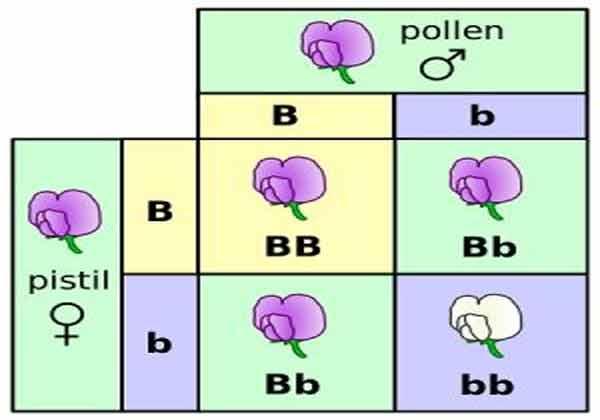 O que são genes alelos