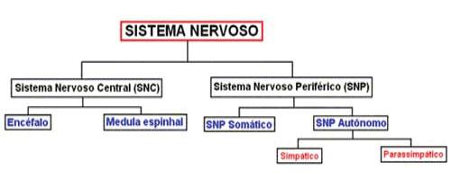 Tipos de sistema nervoso