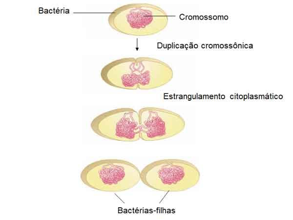Divisão celular em procariotos