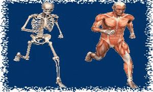 Super interessante coleções, músculos e ossos