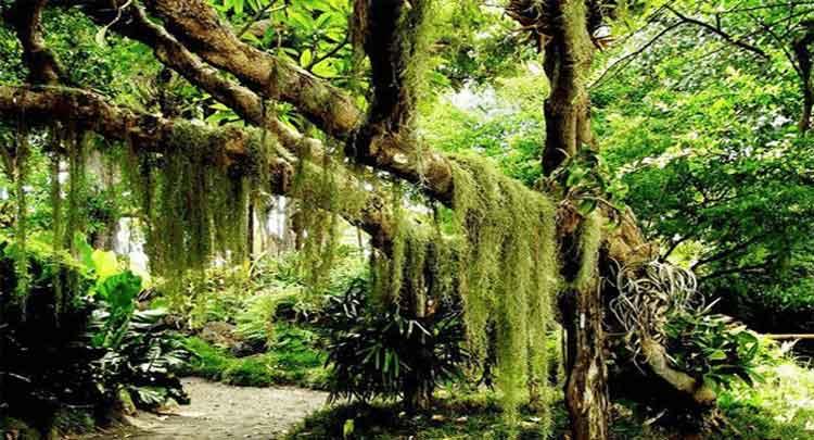 Foto de Botânica – Grupos Vegetais  – Características principais de cada grupo