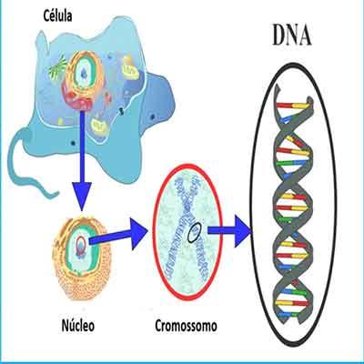 genes dna células