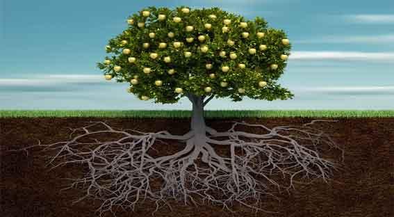 Foto de Tipos de Raiz: partes, função das raízes, resumo