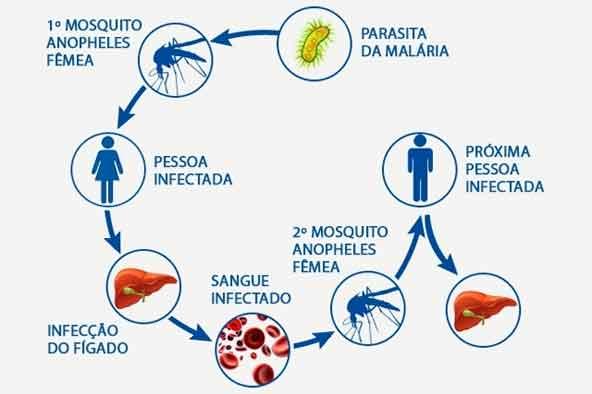Ciclo de vida do parasita