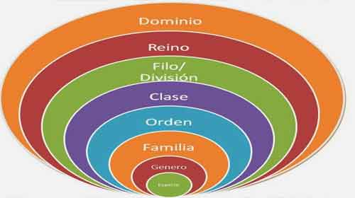 Foto de Introdução a taxonomia, sistemática, especiação e filogenia