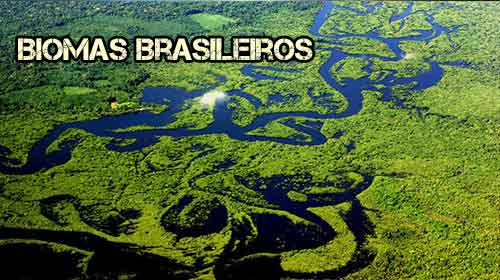 Foto de Os principais Biomas Brasileiros resumo