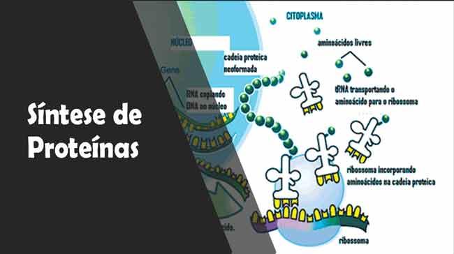 Foto de Síntese proteica: a produção de proteínas – Resumo