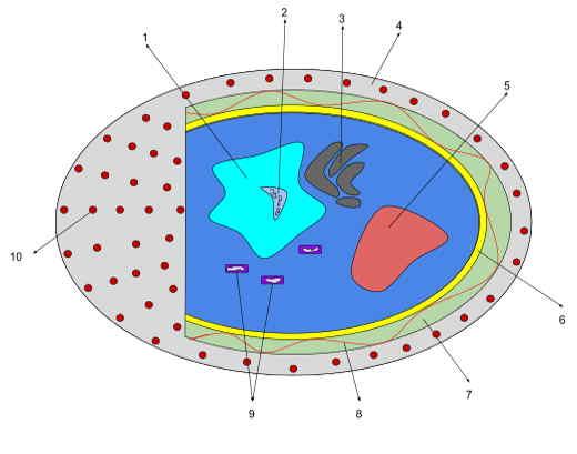 o que são diatomáceas