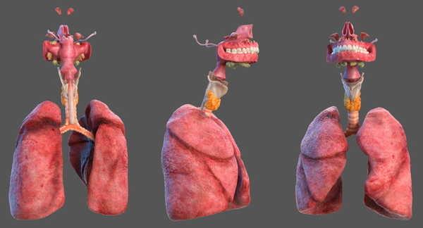 Foto de Função do Sistema Respiratório