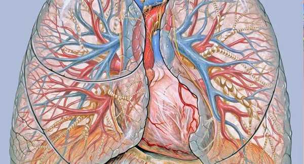 Como funcionam os bronquíolos