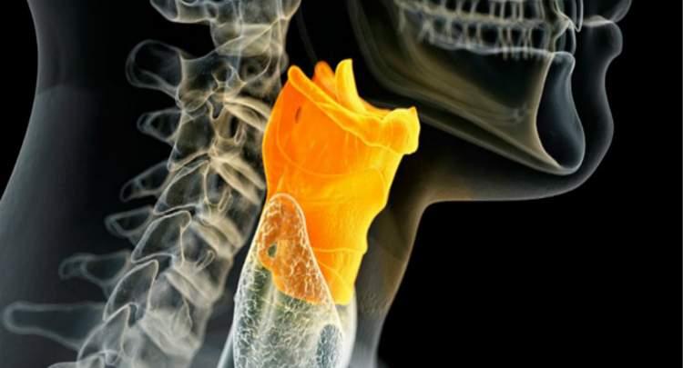 Foto de Cordas Vocais: anatomia, função – Pregas Vocais