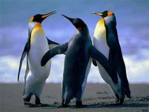3 pinguins