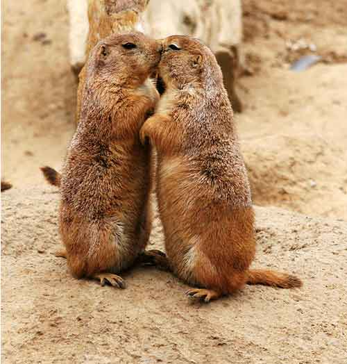 Amor de esquilo