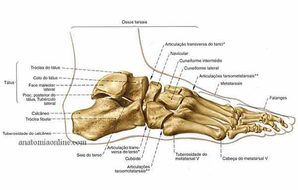 todos os ossos do pé