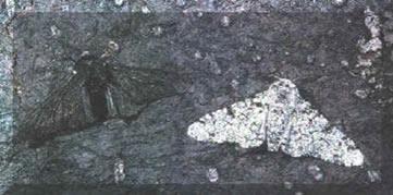 Photo of Introdução à Seleção Natural
