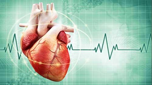 Photo of Fisiologia do Sistema Cardiovascular – Circulação